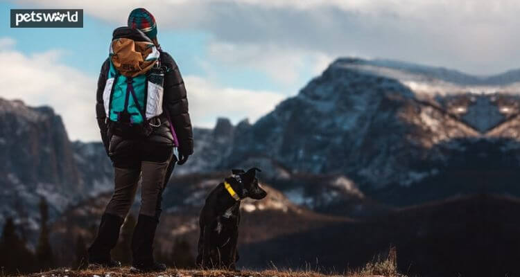 Issues to Know Whereas Going for a Hike With Your Canine  Issues to Know Whereas Going for a Hike With Your Canine Going for a Hike With Your Dog