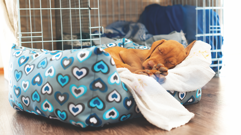 What to Know About Your 10-Week-Outdated Pet  What to Know About Your 10-Week-Outdated Pet Puppy Bed getty1150522493