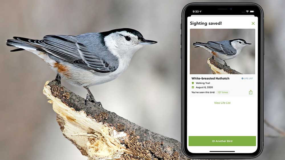 Easy methods to Save a Record of Birds You've got Recognized Utilizing Our Merlin App  Easy methods to Save a Record of Birds You've got Recognized Utilizing Our Merlin App Merlin WBNU FI