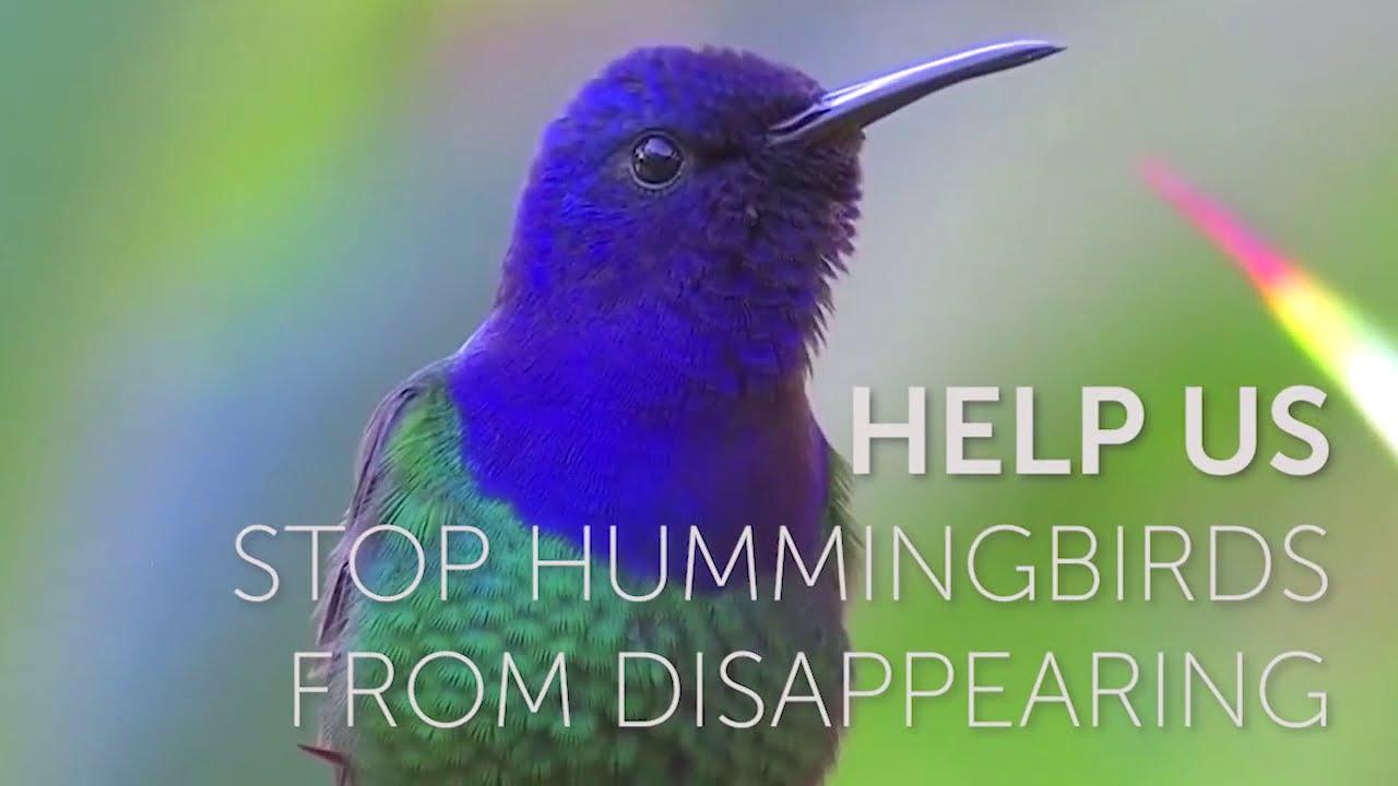 Hummingbirds Want Your Assist  Hummingbirds Want Your Assist 1599341587 maxresdefault