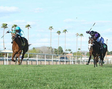 Stay Racing to Resume at Turf Paradise in January  Stay Racing to Resume at Turf Paradise in January 368d83f7bafb4c2d86f51a2562049da6