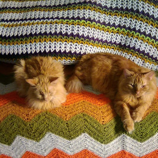 Purrsday Poetry: Cat  Purrsday Poetry: Cat SweetPeaandGato couch