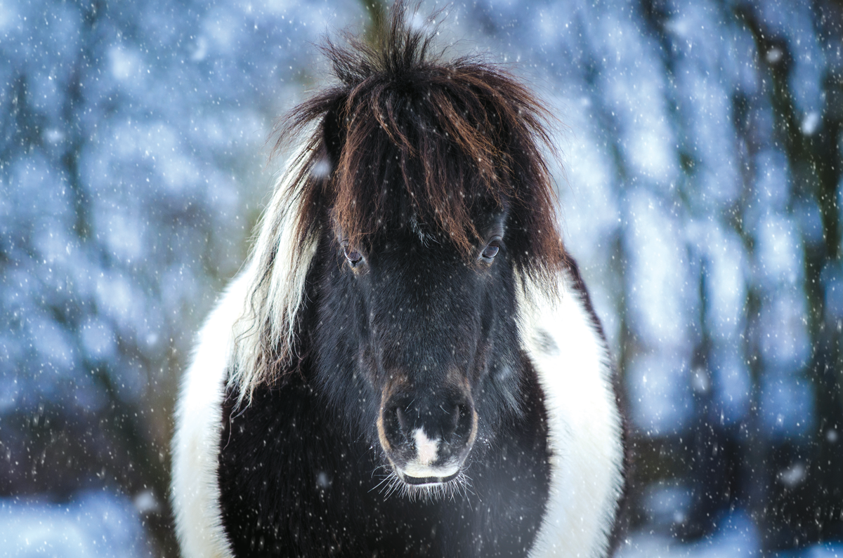 5 methods to seek out your festive spirit (even in the event you're REALLY not feeling it this 12 months)  5 methods to seek out your festive spirit (even in the event you're REALLY not feeling it this 12 months) Fluffy Pony