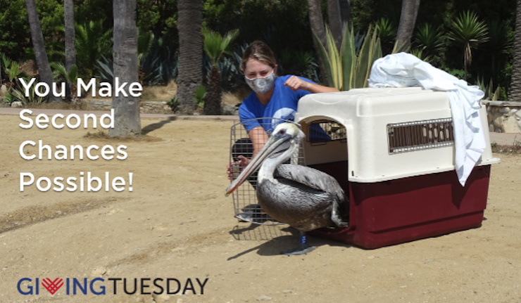 You Can Make Second Possibilities Potential On #GivingTuesday – Worldwide Chicken Rescue  You Can Make Second Possibilities Potential On #GivingTuesday – Worldwide Chicken Rescue GT Second ChancesBRPE release