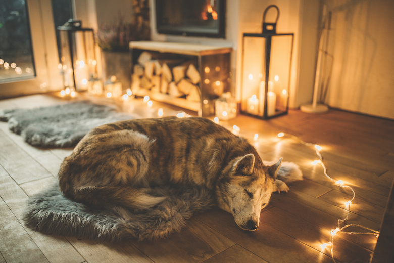 Dug Up at Dogster: December 2020 Canine Occasions and Canine Holidays  Dug Up at Dogster: December 2020 Canine Occasions and Canine Holidays Winter sleep getty1184220673
