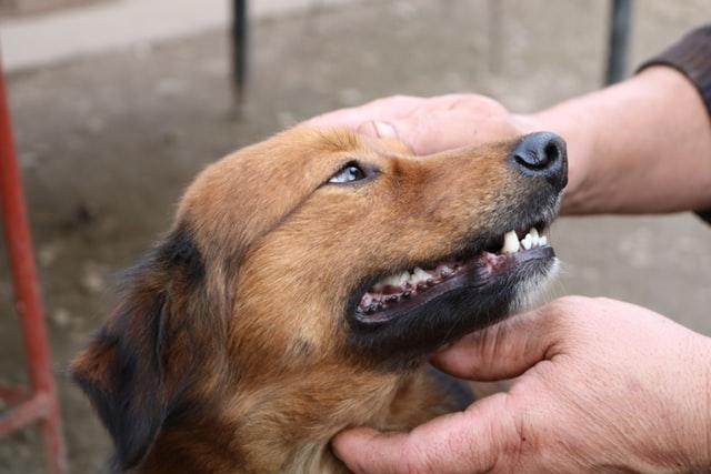 Finest Pure Methods To get Rid of Fleas On Canines  Finest Pure Methods To get Rid of Fleas On Canines fox U5P1GThl5BY unsplash