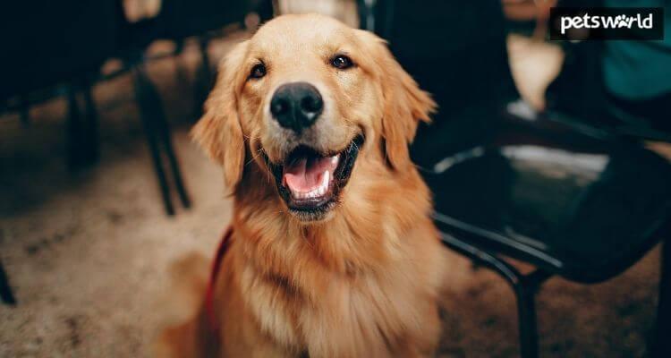 Encourage Optimistic Behaviour in Your Canine  Encourage Optimistic Behaviour in Your Canine Encourage Positive Behaviour in Your Dogs