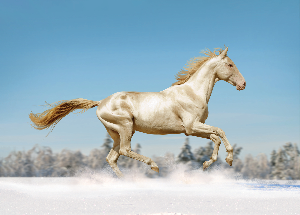 Seven methods TV and movies get horses completely and fully mistaken  Seven methods TV and movies get horses completely and fully mistaken Galloping Horse