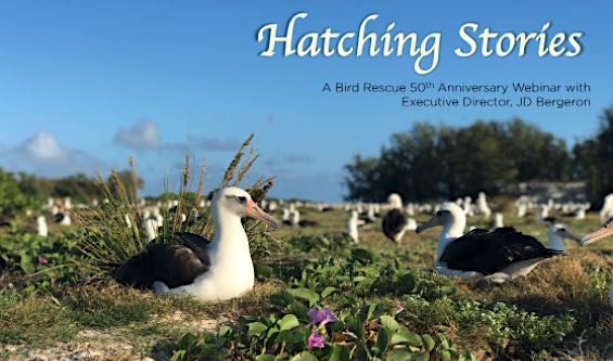 Hatching Tales: January 14th On-line Hangout To Have fun 50th Yr – Worldwide Chook Rescue  Hatching Tales: January 14th On-line Hangout To Have fun 50th Yr – Worldwide Chook Rescue Hatching Stories Albatrosses Online Hang Out