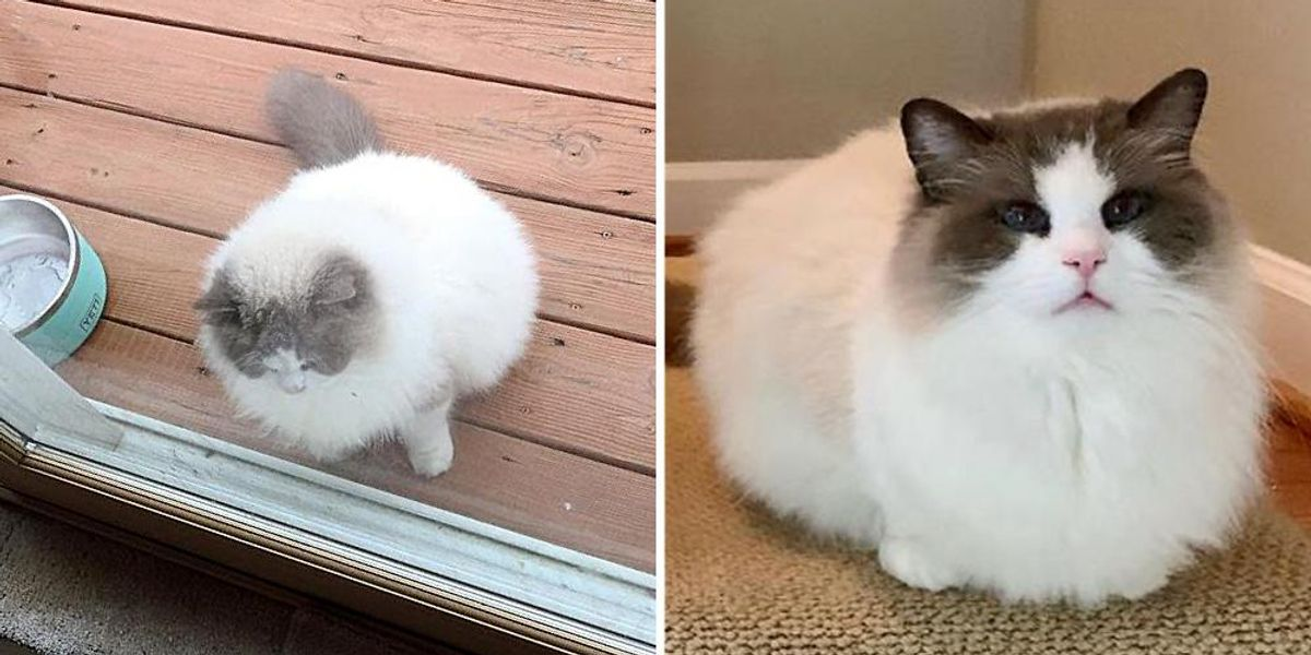 Cat Confirmed Up Exterior Neighbor's Door After Being Left Behind, and Discovered His Strategy to Household of His Goals  Cat Confirmed Up Exterior Neighbor's Door After Being Left Behind, and Discovered His Strategy to Household of His Goals img