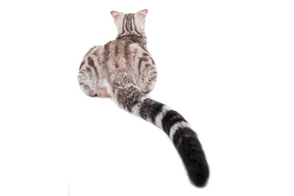 Four Methods the Cat Butt Can Give You a Larger Image of Your Kitty's Well being  Four Methods the Cat Butt Can Give You a Larger Image of Your Kitty's Well being A cat butt and cat tail