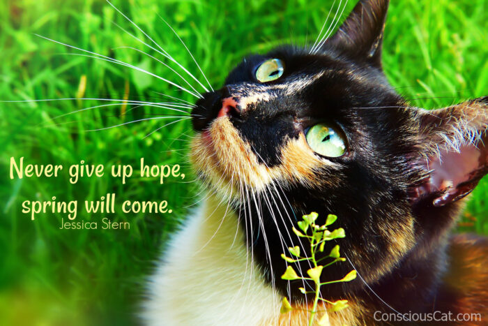 Sunday Quotes: Hoping for Spring  Sunday Quotes: Hoping for Spring cat spring flowers hope edited e1614080515236