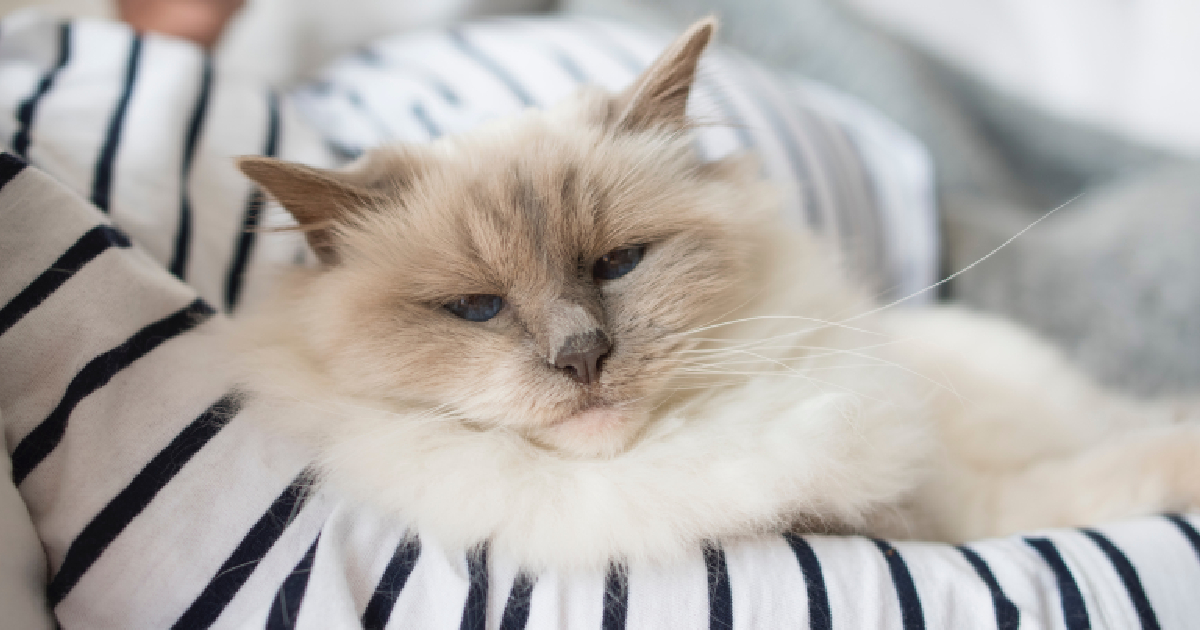 13 Indicators Your Cat Will Most likely Stay A Lengthy Life  13 Indicators Your Cat Will Most likely Stay A Lengthy Life signs cat live long