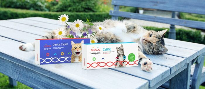 Get $30 Off Basepaws Breed and  Well being DNA Take a look at Plus FREE Dental Report  Get $30 Off Basepaws Breed and  Well being DNA Take a look at Plus FREE Dental Report Basepaws DNA tests e1627473064671
