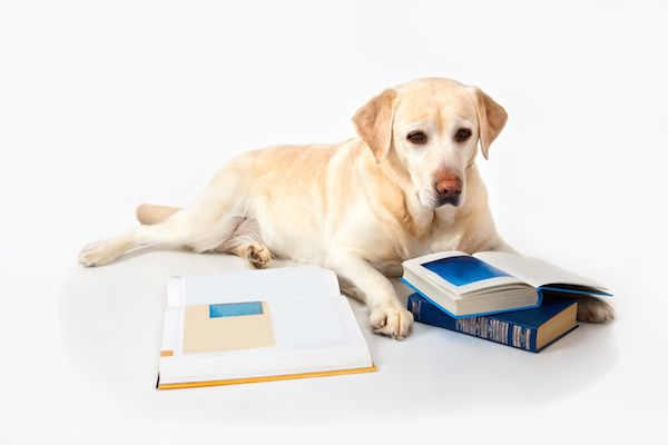 Bark About Books  Bark About Books shutterstock 1338697221